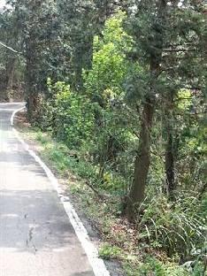 其他用地-北埔樟樹園-新竹縣北埔鄉