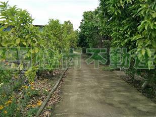 竹東農場美地
